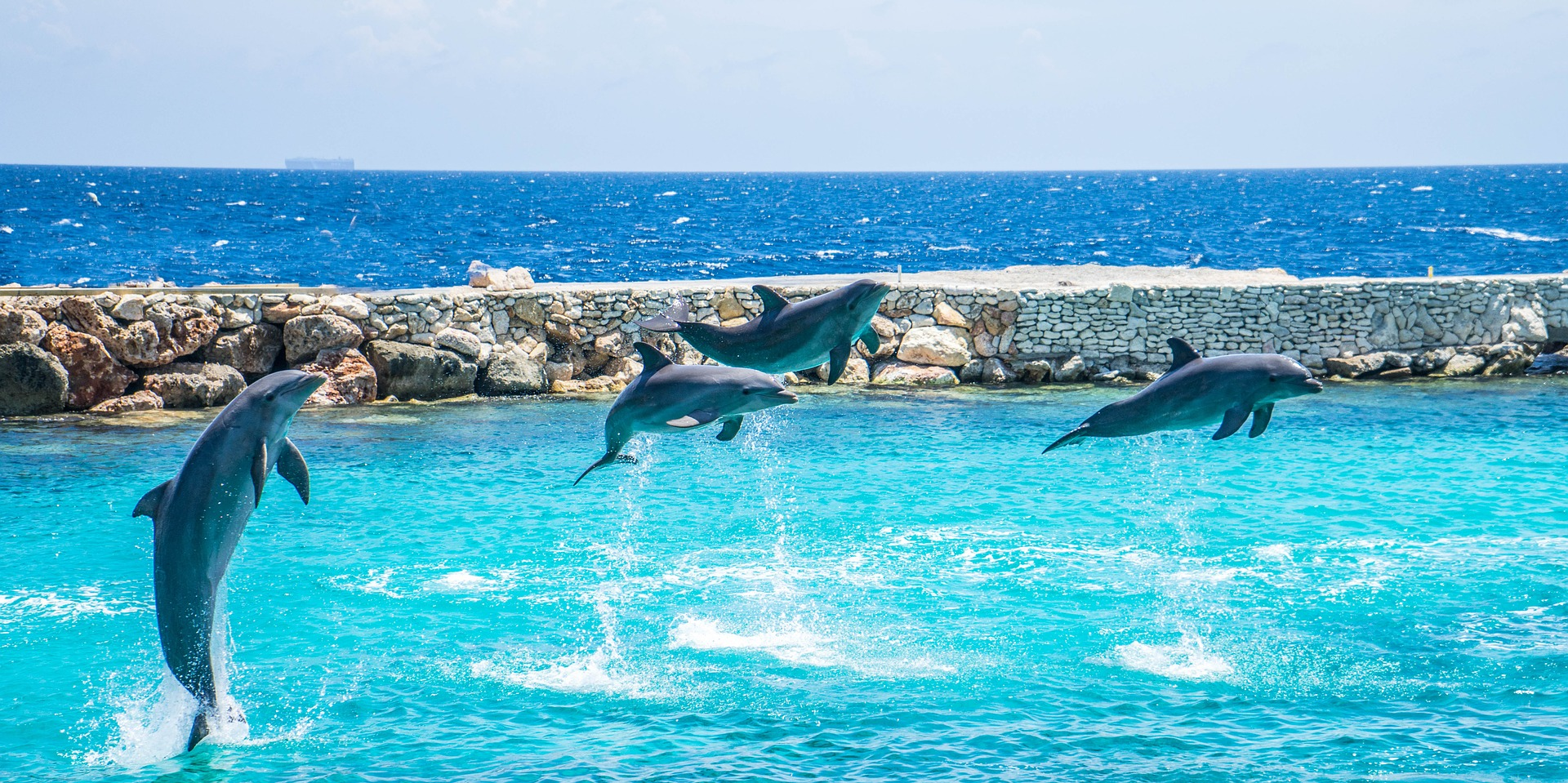 dolphins-920068_1920